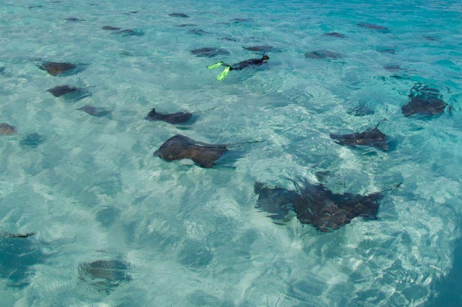 Stingray Snorkel Trips to the Sandbar in Grand Cayman - Image 27