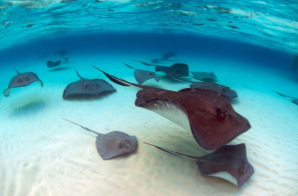 Stingray Snorkel Trips to the Sandbar in Grand Cayman - Image 28
