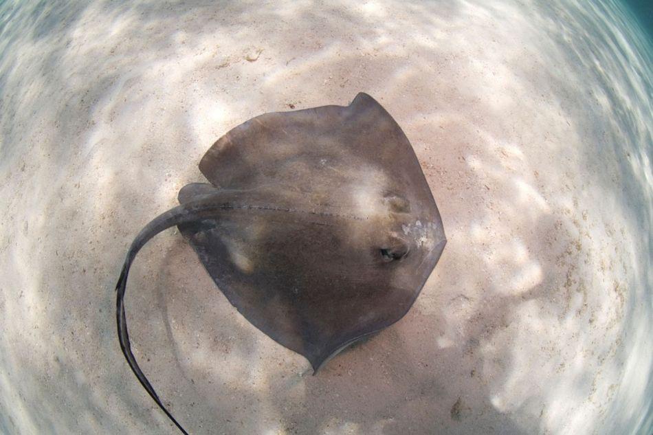 Stingray Snorkel Trips to the Sandbar in Grand Cayman - Image 3
