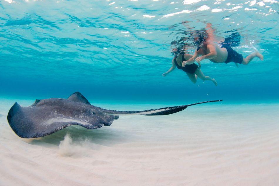 Stingray Snorkel Trips to the Sandbar in Grand Cayman - Image 7